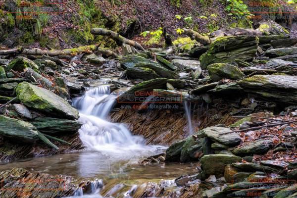 Schluchten- und Brückenpfad - Frühling 3