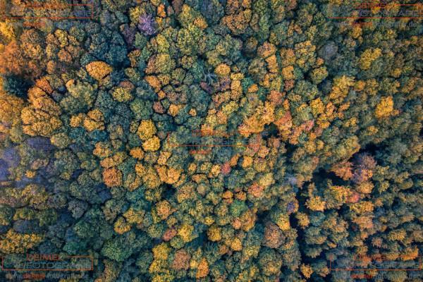 Wald - Herbst 3