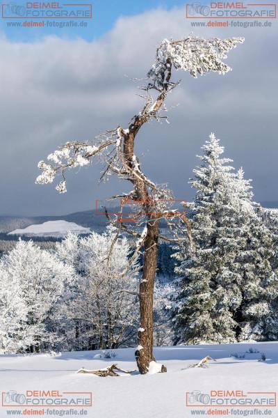 Kahler Asten - Winter 3