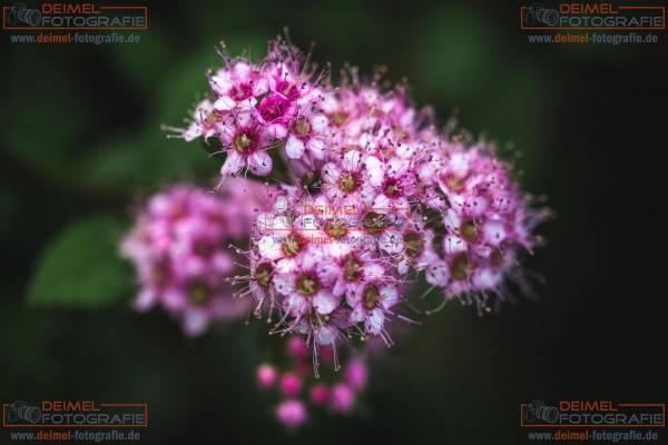 Pflanze 5