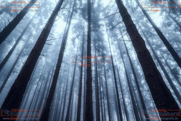 Wald - Herbst 1