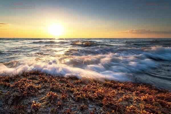 Wellen mit Seegras