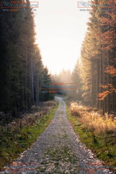 Wald - Herbst 4