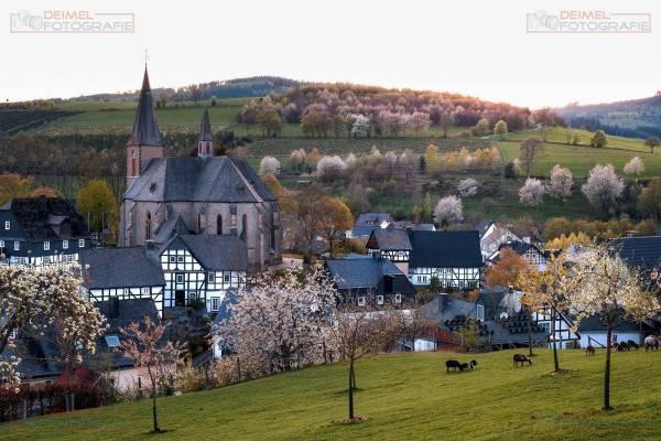 Assinghausen - Frühling 1