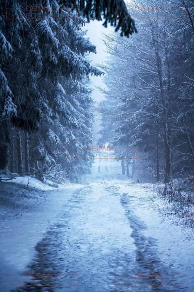 Verschneiter Waldweg mit Tannen