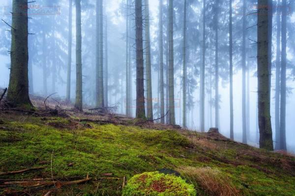 Mystischer Wald mit Nebel